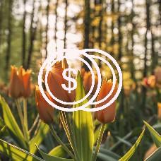 Bonuses - Reward people for certain actions