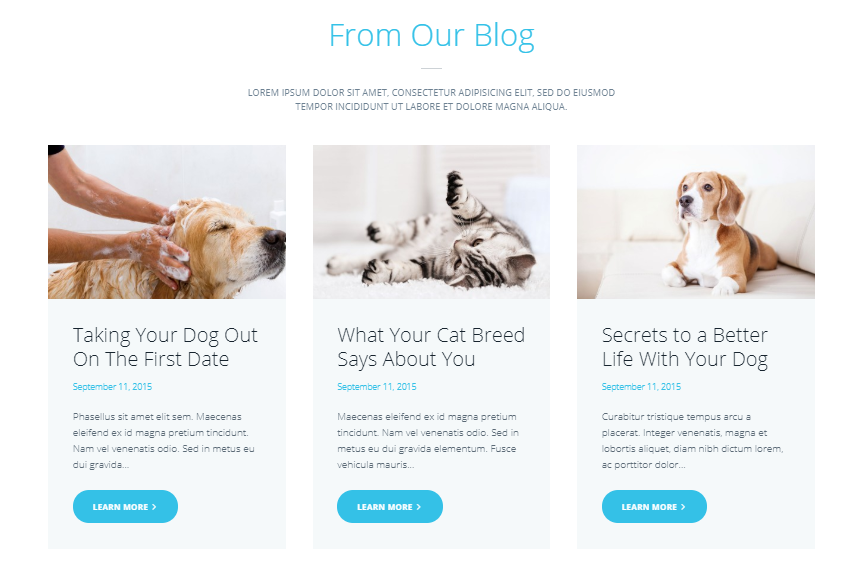 Pet Club - Services, Adoption, Dating & Community WordPress Theme